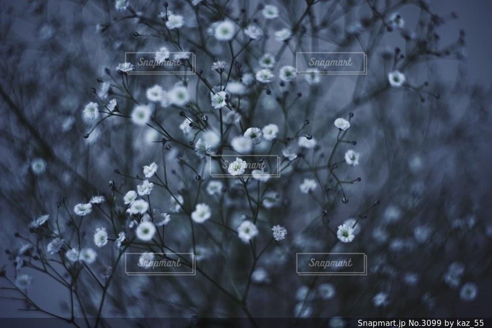 風景の写真・画像素材[3099]