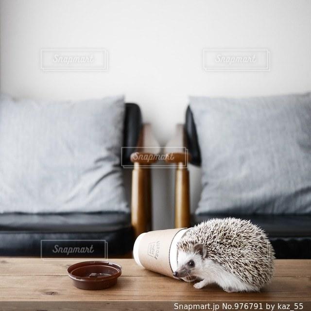 茶色と白の犬をベッドの上に座っての写真・画像素材[976791]