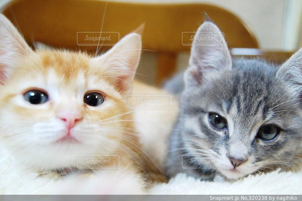 猫,にゃんこ,ねこ,子猫