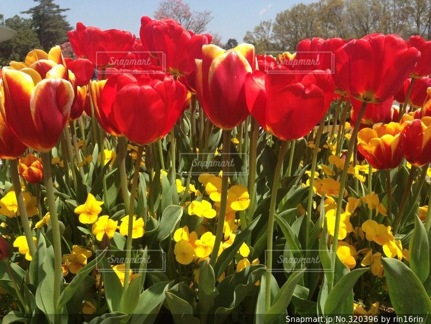 花の写真・画像素材[320396]