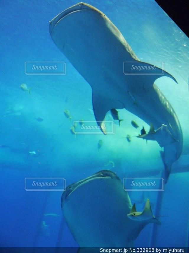 水族館の写真・画像素材[332908]