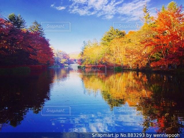 木々 に囲まれた水の体の写真・画像素材[883293]