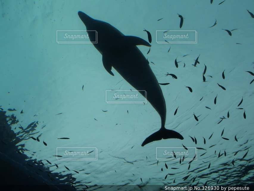 海の写真・画像素材[326930]