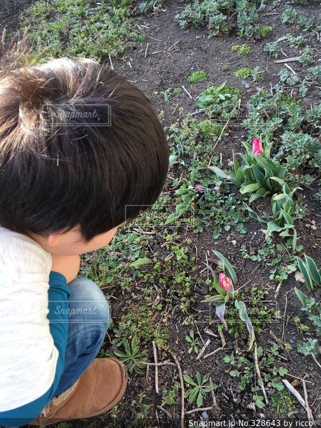花の写真・画像素材[328643]
