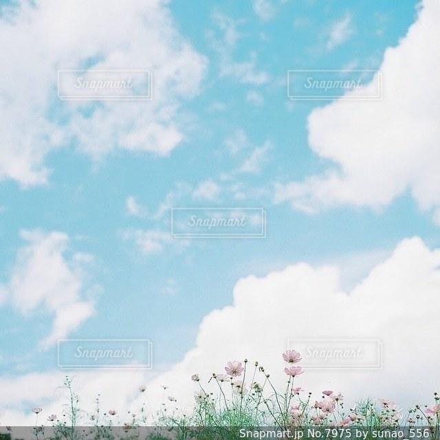 風景の写真・画像素材[7975]