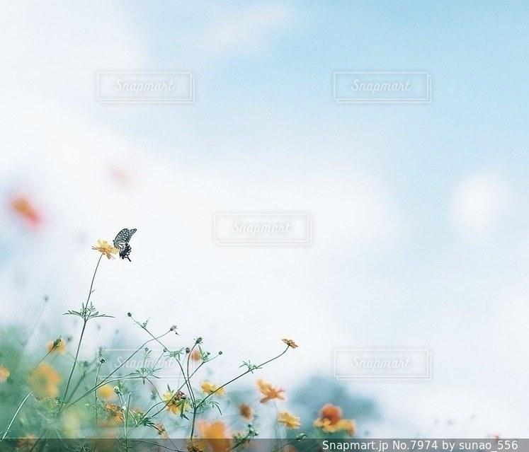 風景の写真・画像素材[7974]