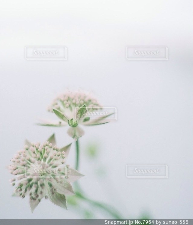 風景の写真・画像素材[7964]