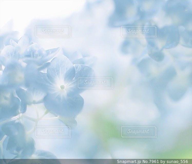 風景の写真・画像素材[7961]