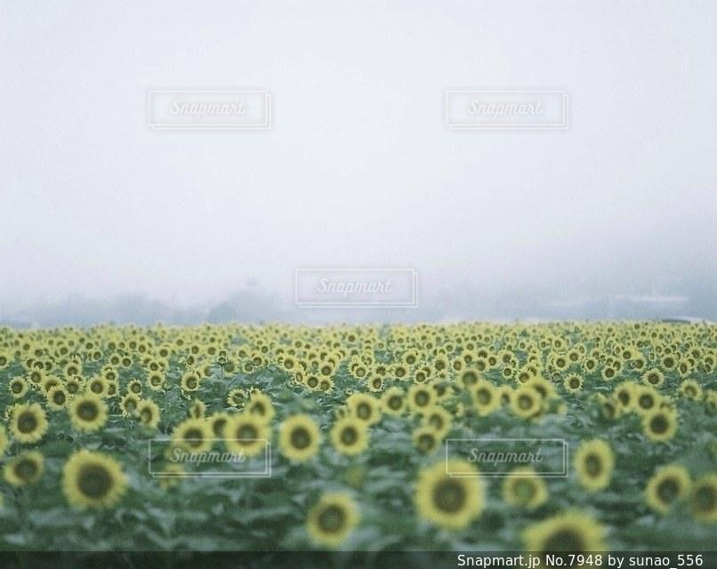 風景の写真・画像素材[7948]