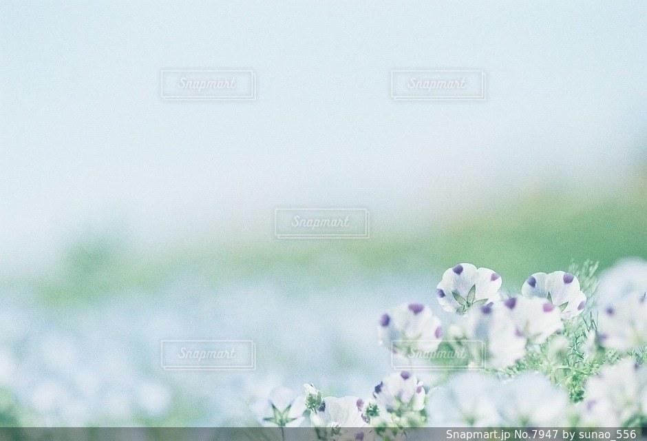風景の写真・画像素材[7947]