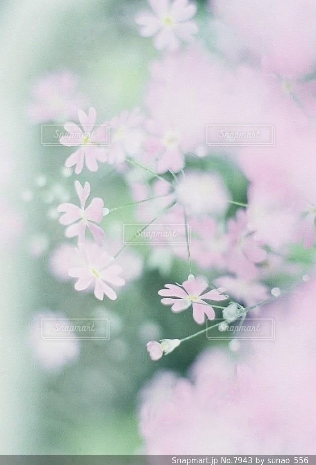 風景の写真・画像素材[7943]