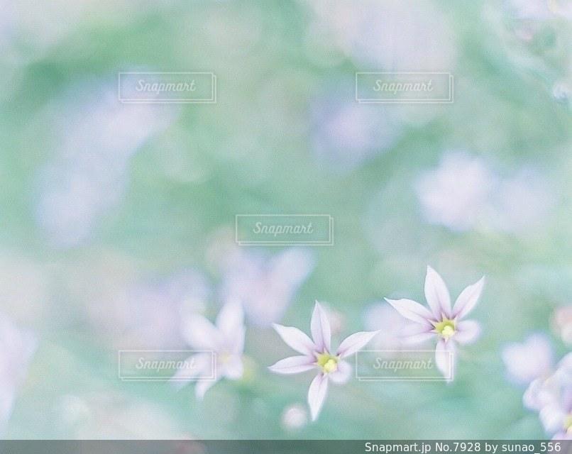 風景の写真・画像素材[7928]