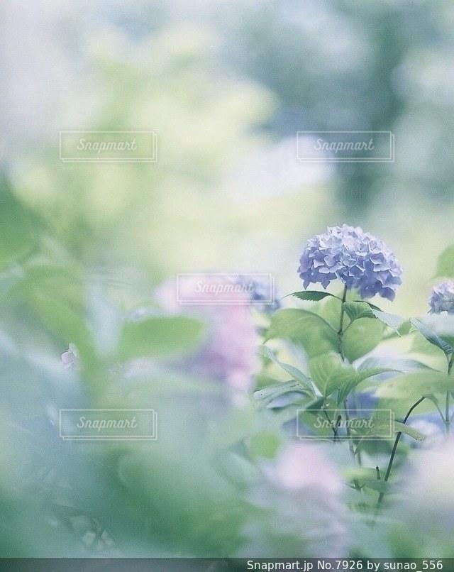 花の写真・画像素材[7926]