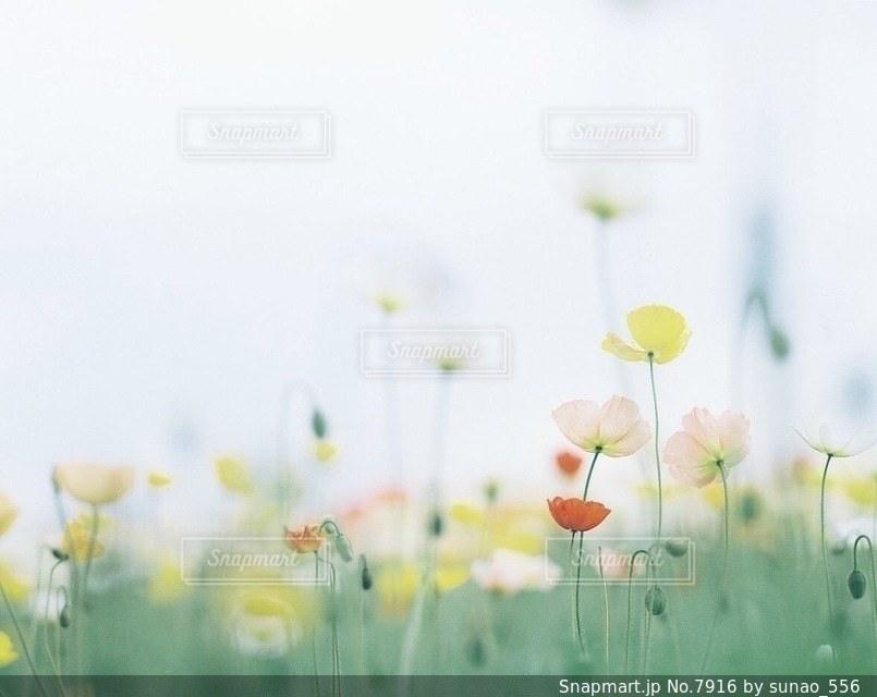 風景の写真・画像素材[7916]