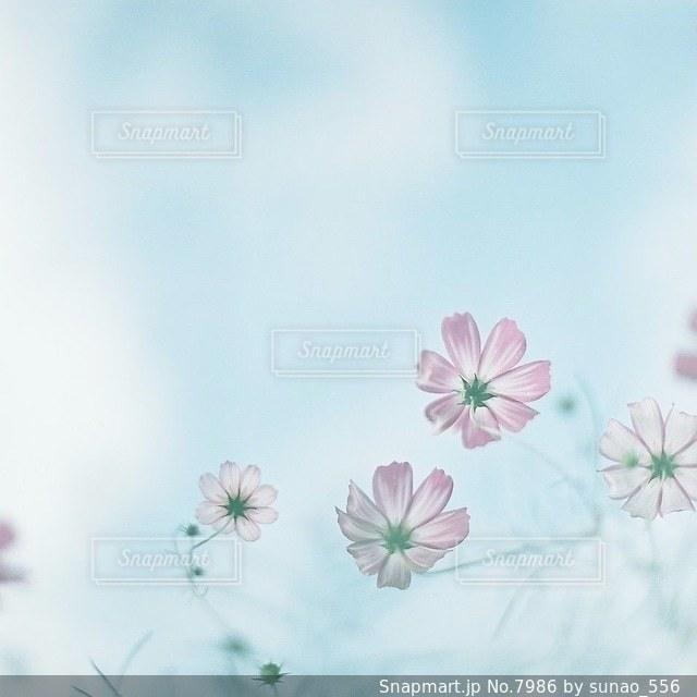 風景の写真・画像素材[7986]