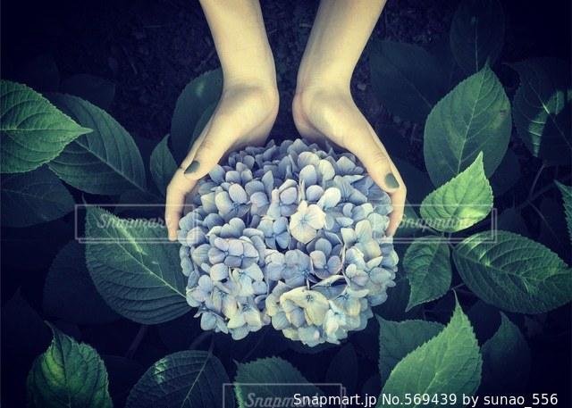 花の写真・画像素材[569439]