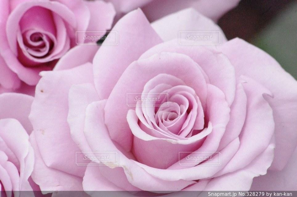 花の写真・画像素材[328279]
