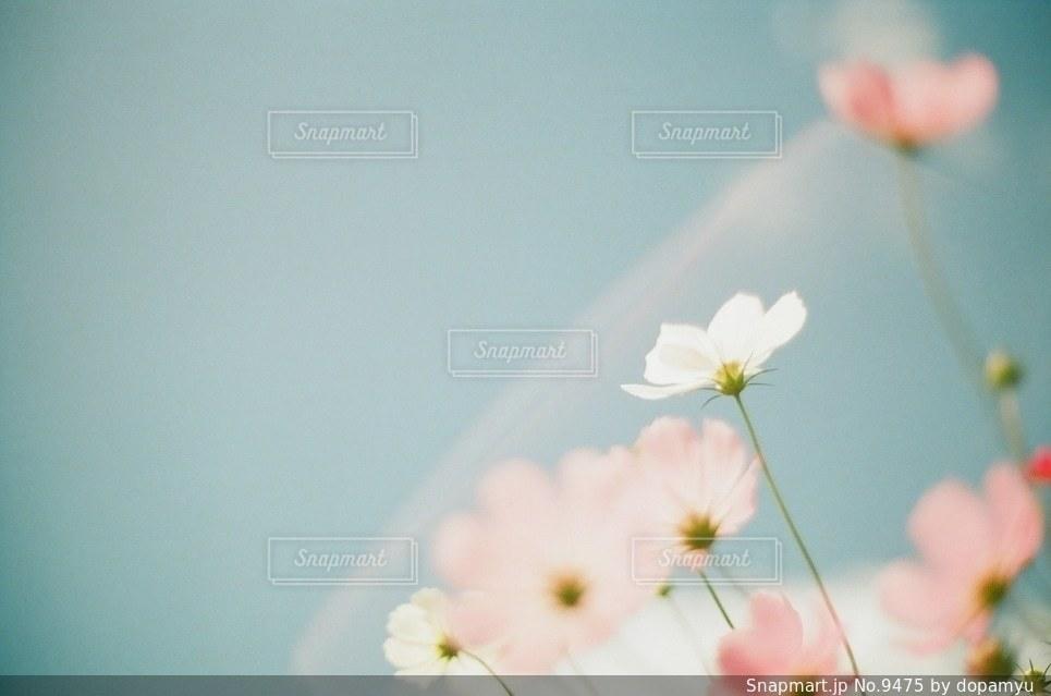 自然の写真・画像素材[9475]
