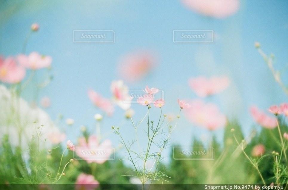 自然の写真・画像素材[9474]