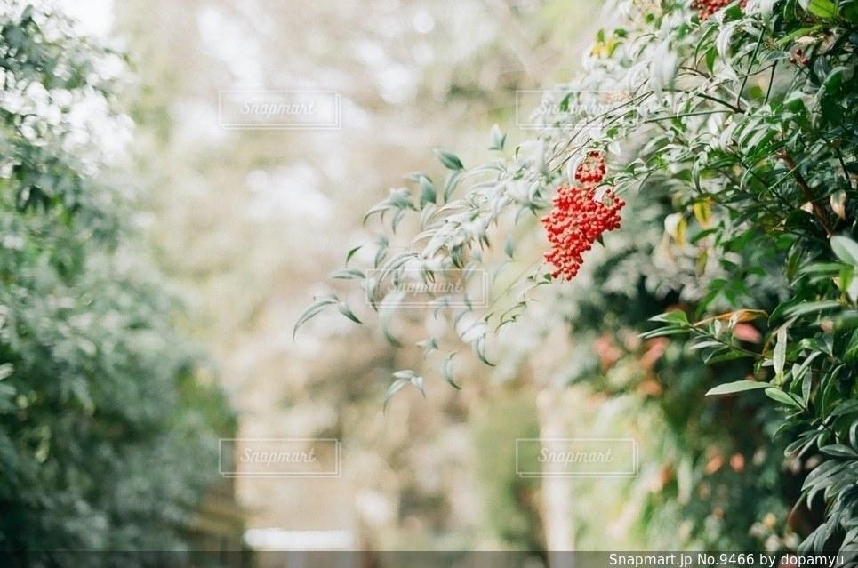 自然の写真・画像素材[9466]