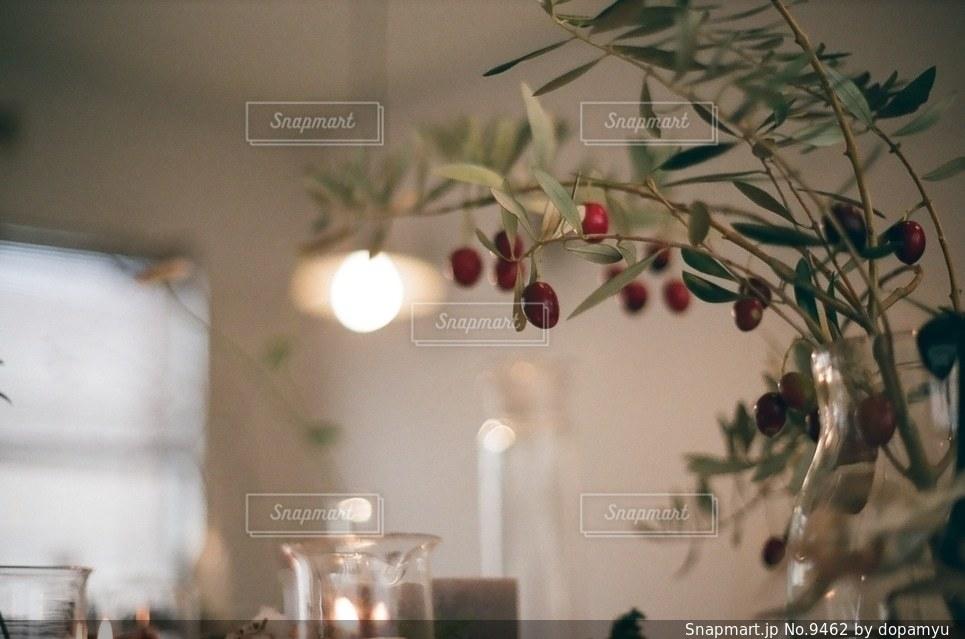 植物の写真・画像素材[9462]