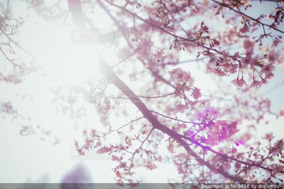 花の写真・画像素材[9456]