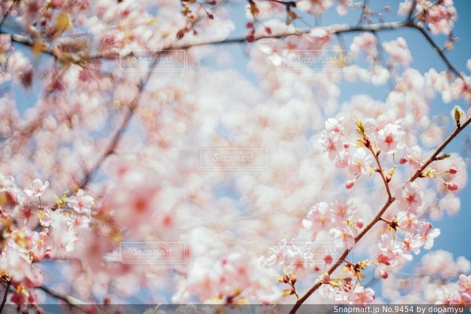 花の写真・画像素材[9454]