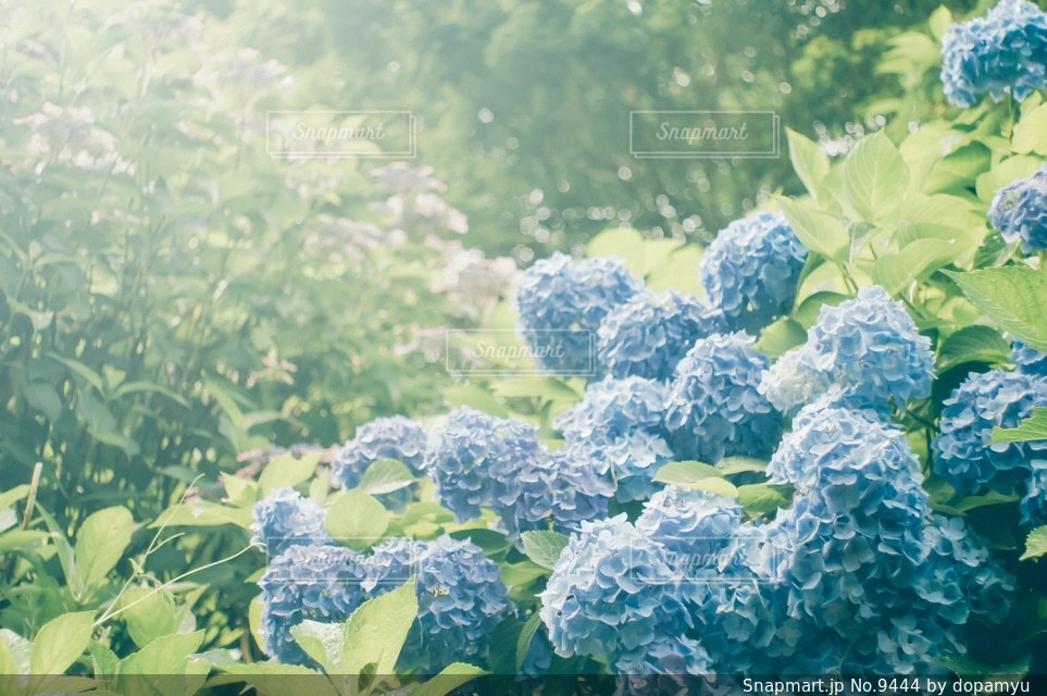 自然の写真・画像素材[9444]