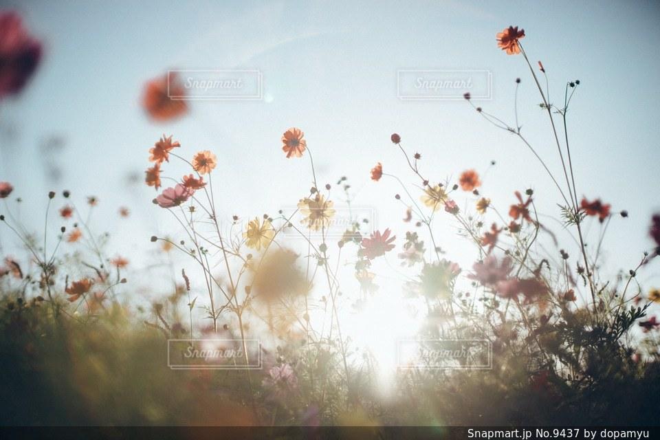 自然の写真・画像素材[9437]