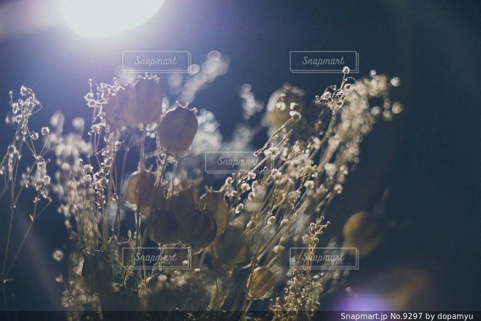 花の写真・画像素材[9297]