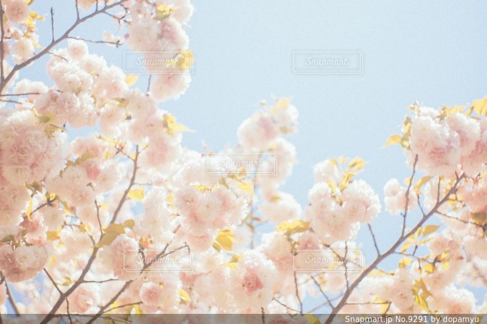自然の写真・画像素材[9291]
