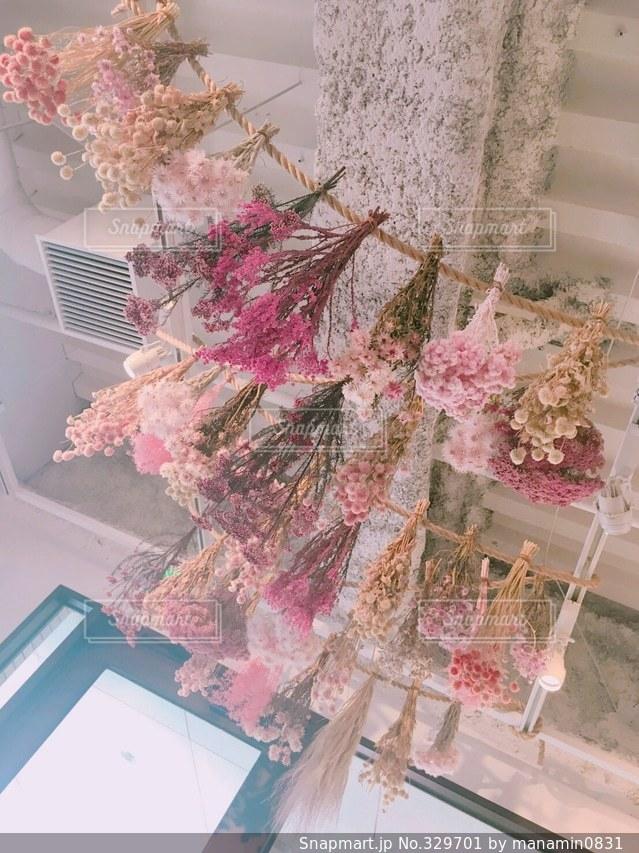 花の写真・画像素材[329701]