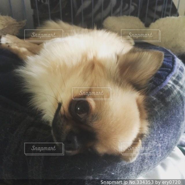 犬の写真・画像素材[334353]