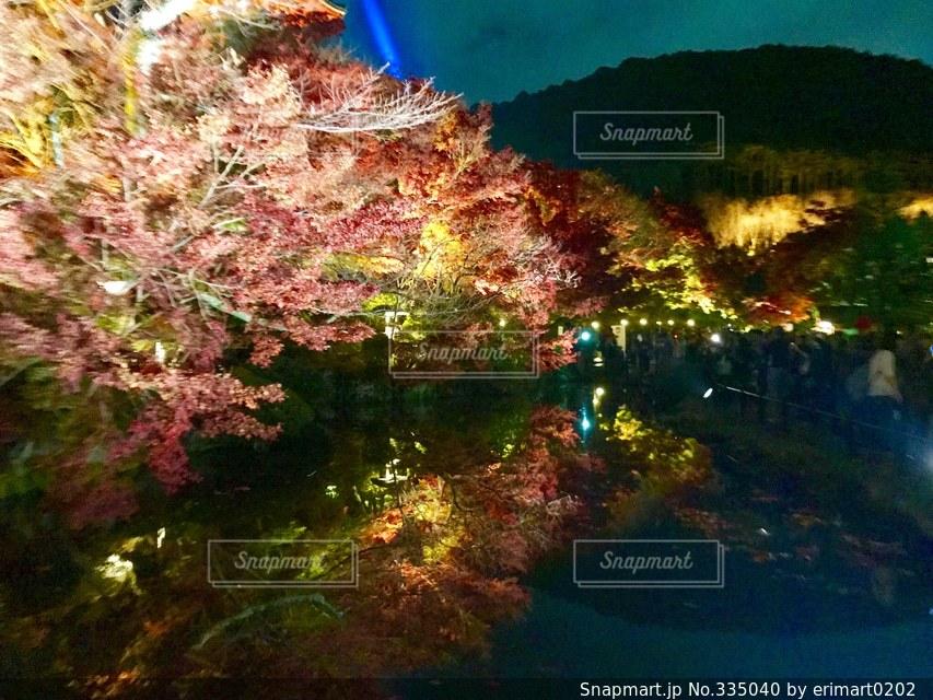夜景の写真・画像素材[335040]