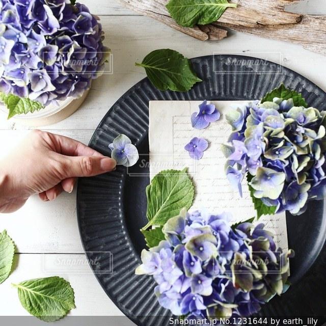 紫陽花の季節の写真・画像素材[1231644]