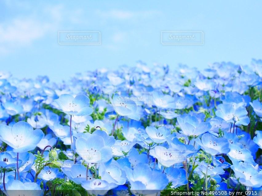 花の写真・画像素材[496508]
