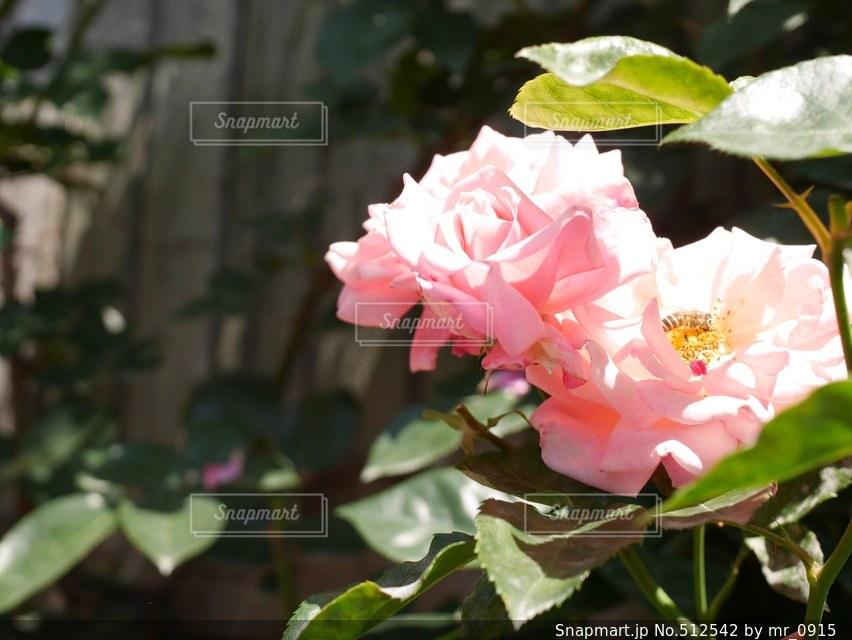 花の写真・画像素材[512542]