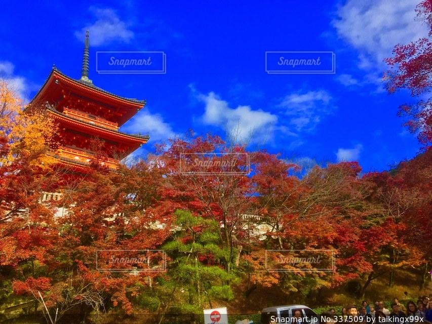 絶景,紅葉,京都,世界の絶景,世界遺産,絶景!