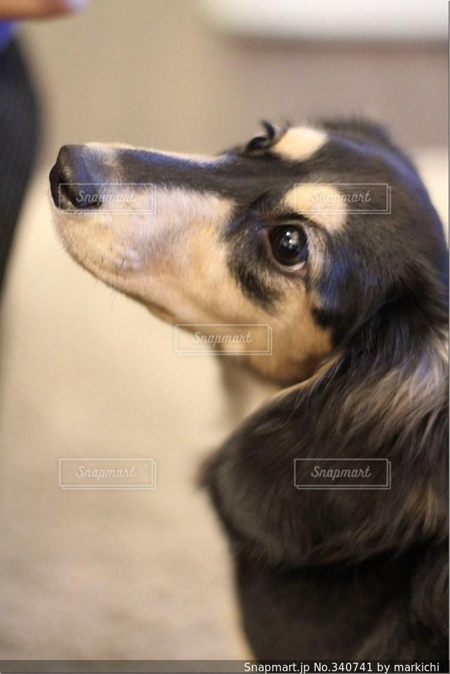 犬の写真・画像素材[340741]