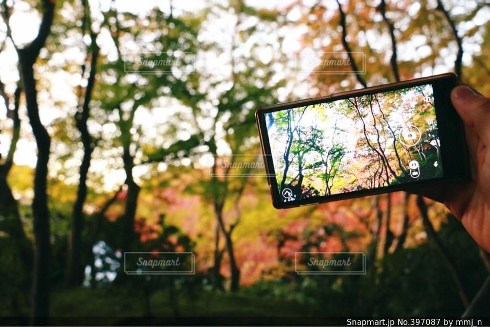 風景,秋,カメラ,カメラ女子,紅葉,京都,スマホ,スマートフォン,iphone,camera,AQUOS,photo