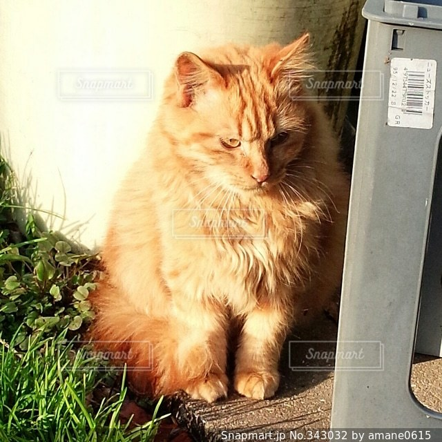 猫の写真・画像素材[343032]