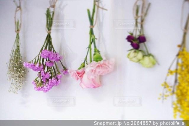 花の写真・画像素材[2064857]