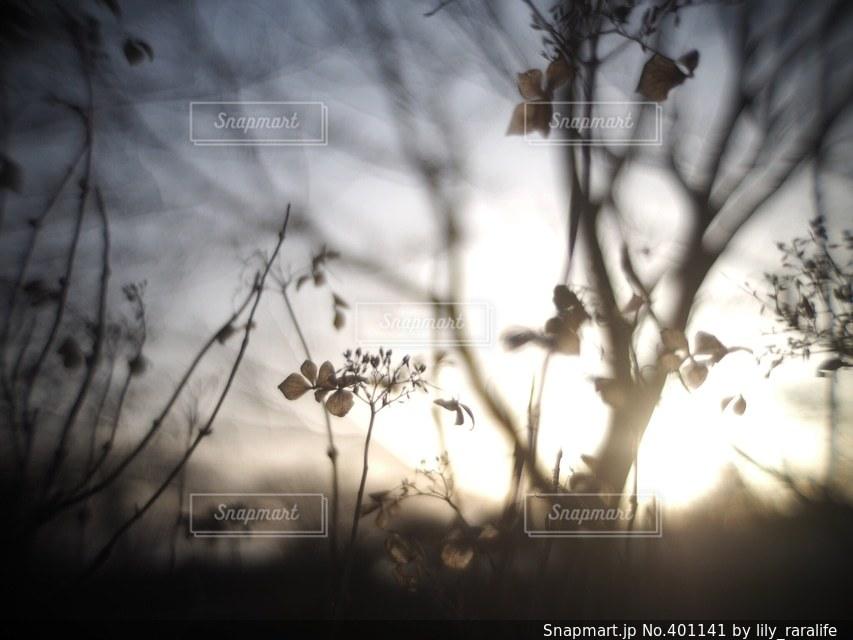冬の写真・画像素材[401141]