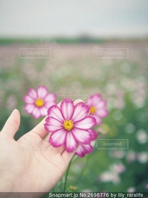 花を持つ人の写真・画像素材[2698776]