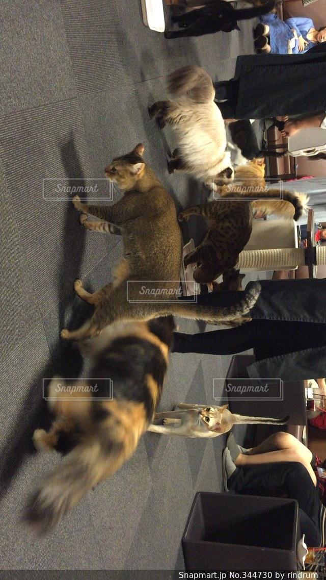 猫の写真・画像素材[344730]