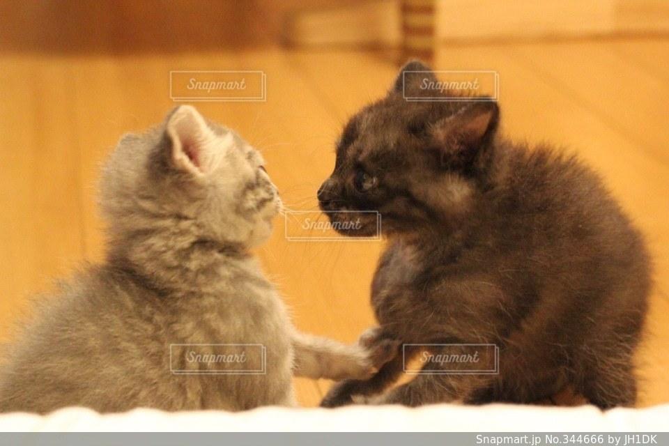 猫の写真・画像素材[344666]