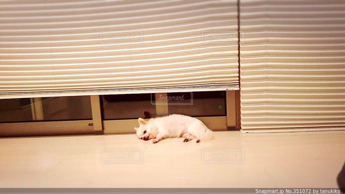 犬の写真・画像素材[351072]