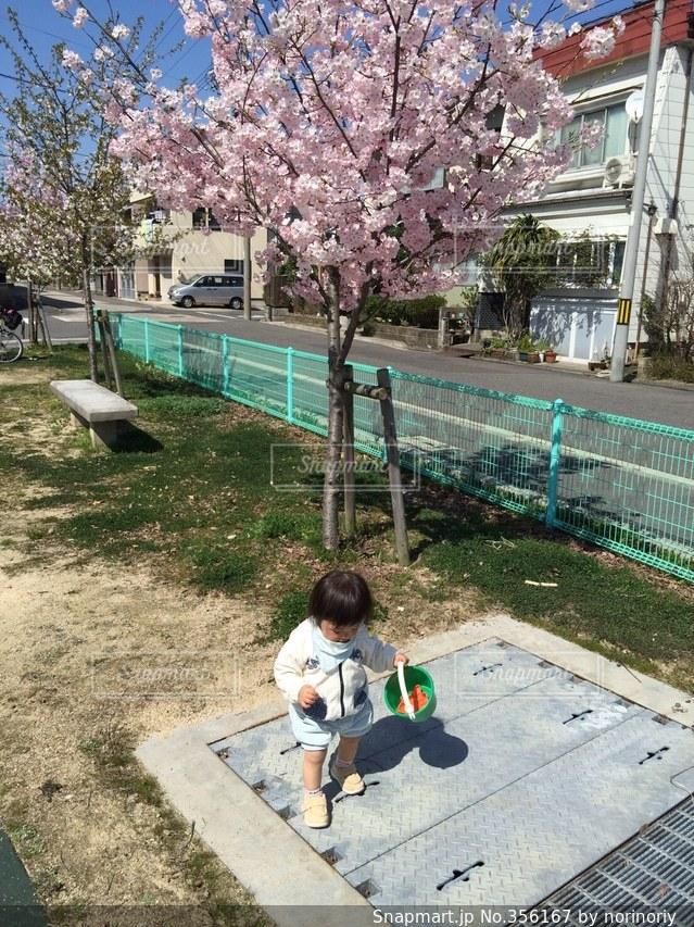 空,公園,春,桜,子供