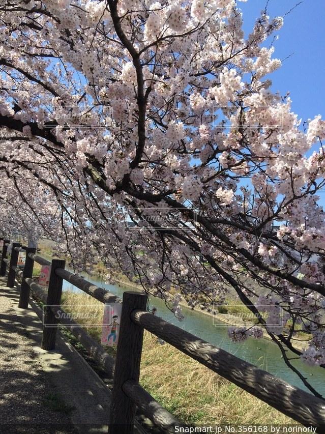 空,公園,春,桜,卒業