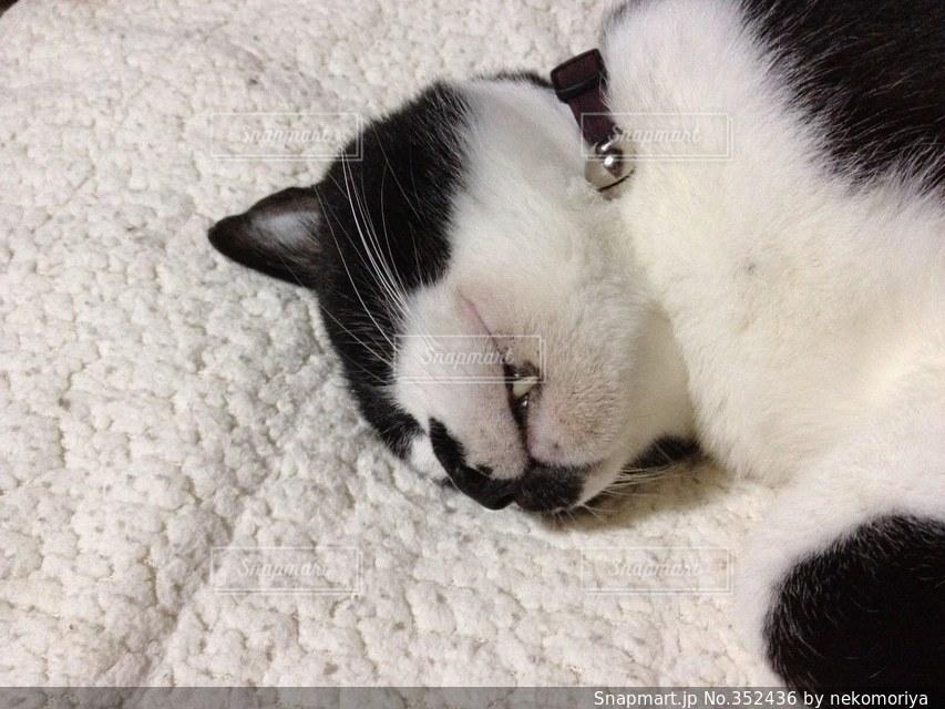 猫 - No.352436